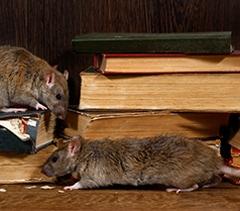 Rodents Img Slider