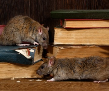 Rodents Img