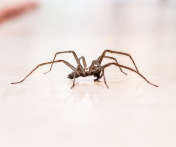 Spiders Img